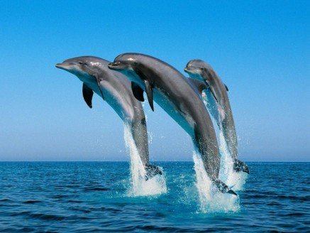 Three Wasini Dolphins in the Air