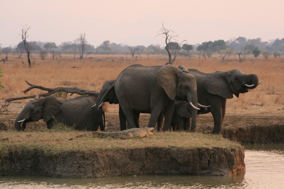 Elephants at Mikumi National Park