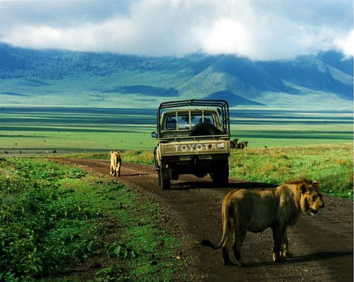 A Lion and a pickup truck in the Ngorongoro Crater