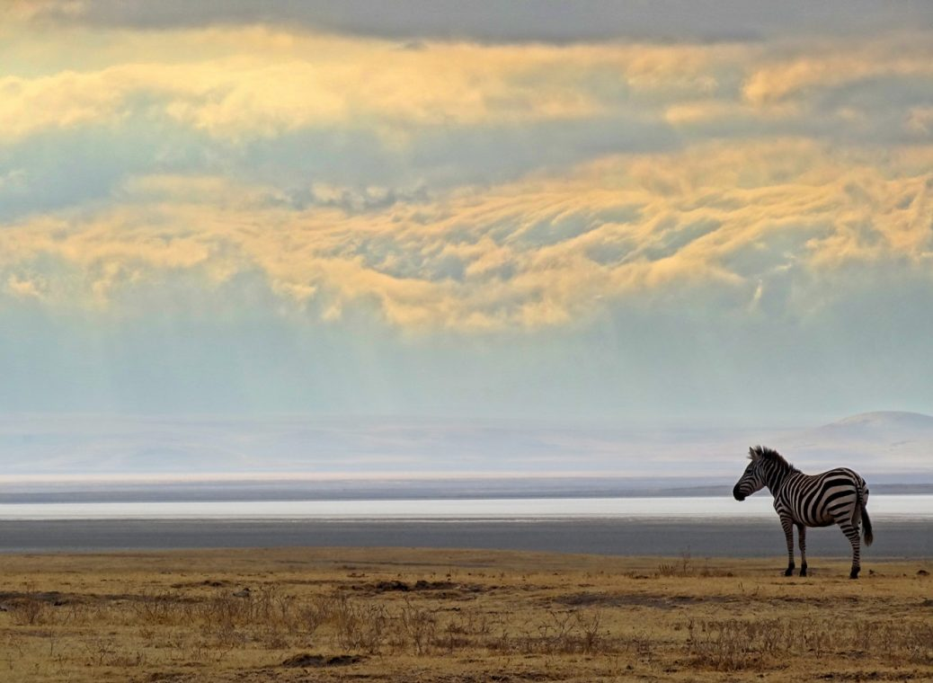 Town And Country Auto >> Rhino Lodge Ngorongoro Crater & Other Things You Need to Know When Visiting the Ngorongoro ...
