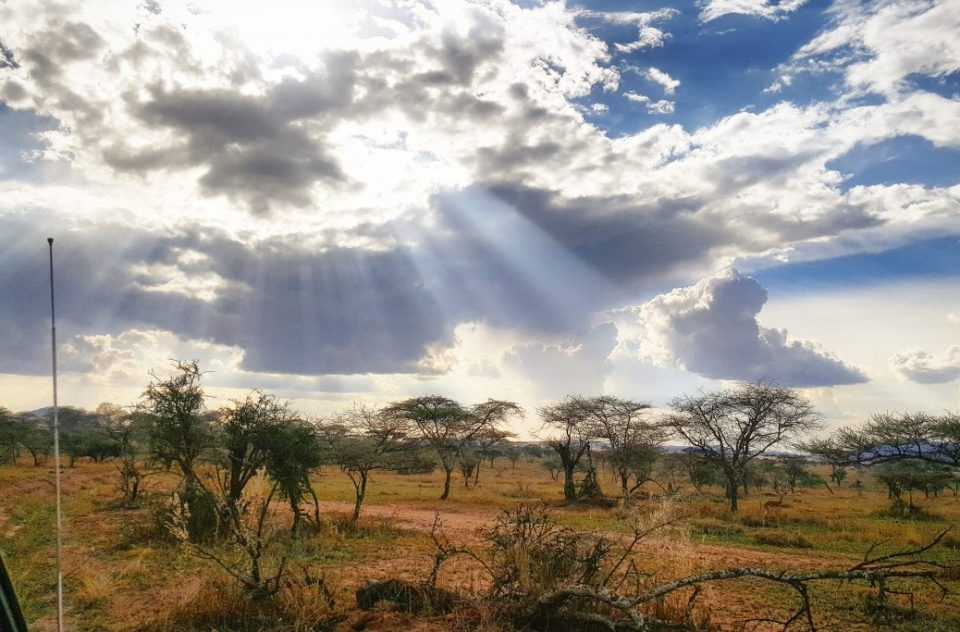 Beautiful sunlight in the Serengeti National Park, Tanzania