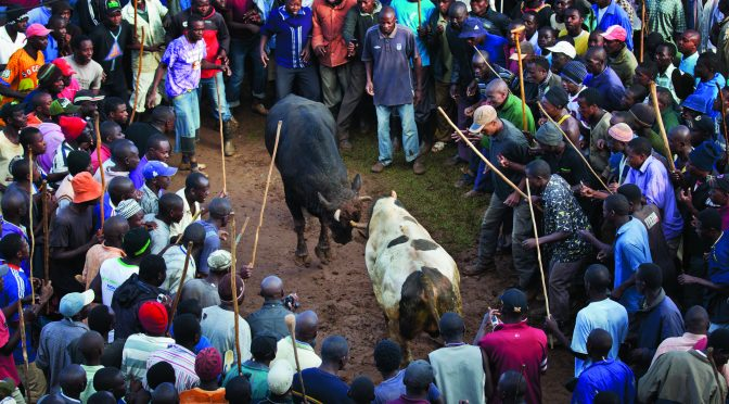 Traditional and Popular Sports in Kenya & South Africa